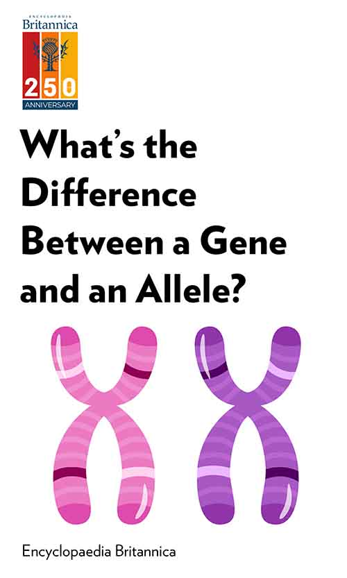 "Book Cover for ""What's the Difference Between a Gene and an Allele?"""