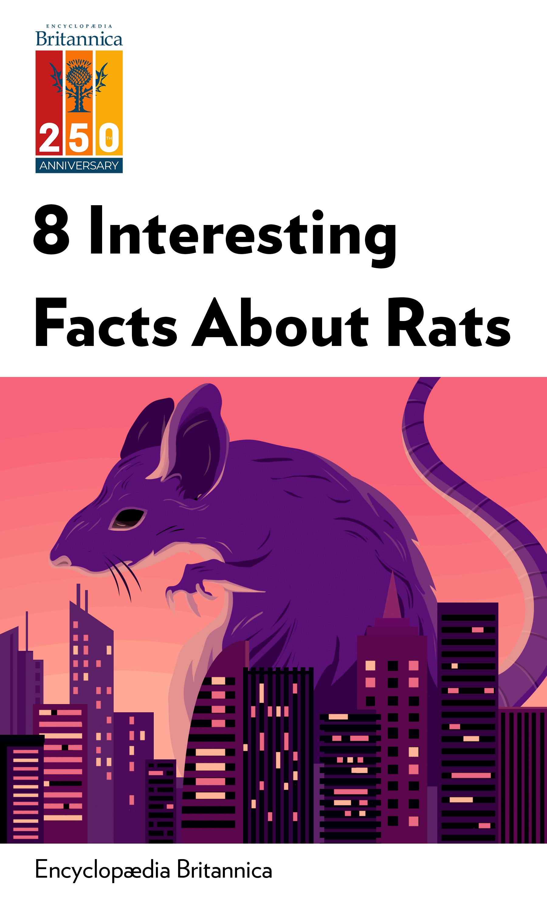 """Book Cover for """"8 Interesting Facts About Rats"""""""