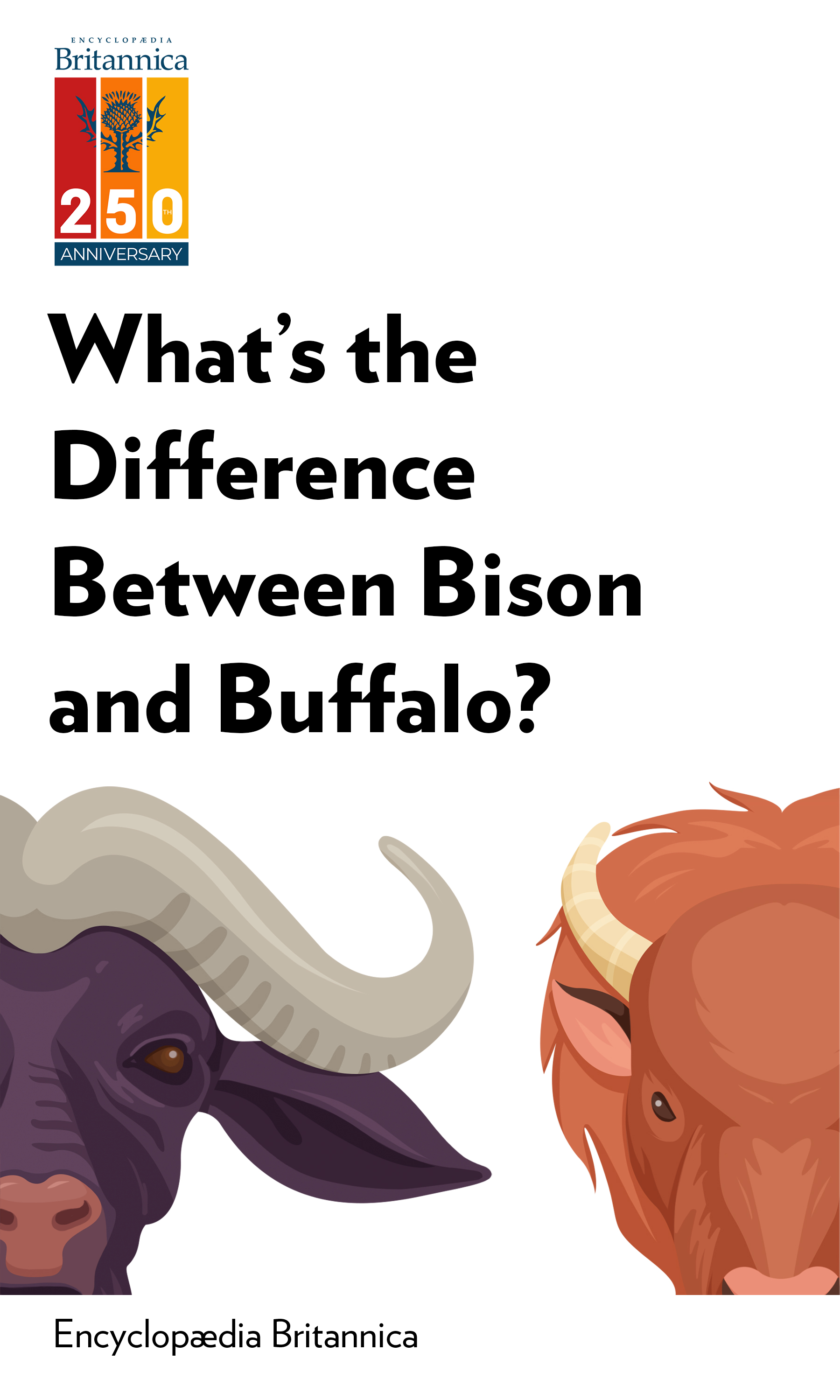 """Book Cover for """"What's the Difference Between Bison and Buffalo?"""""""